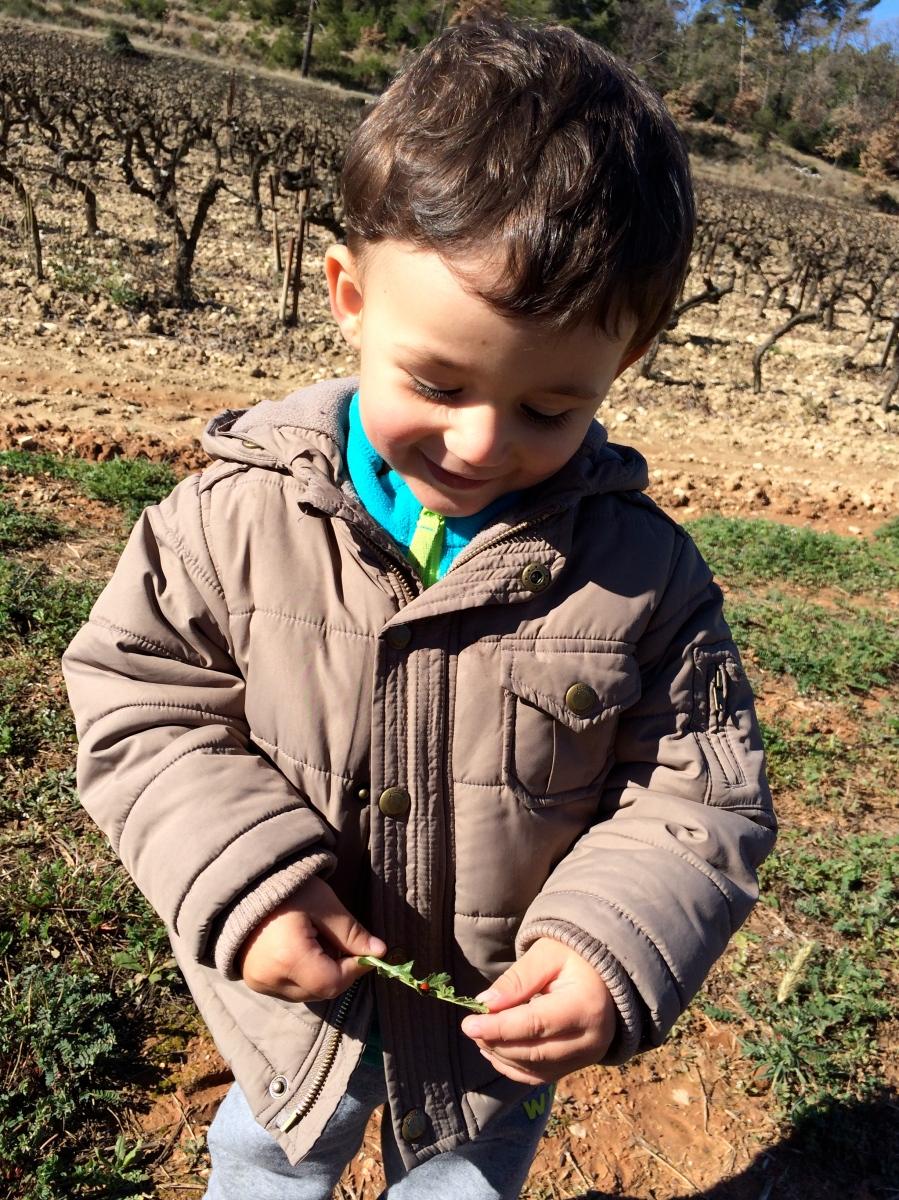 L'Activité Montessori du Jour : observer les coccinelles
